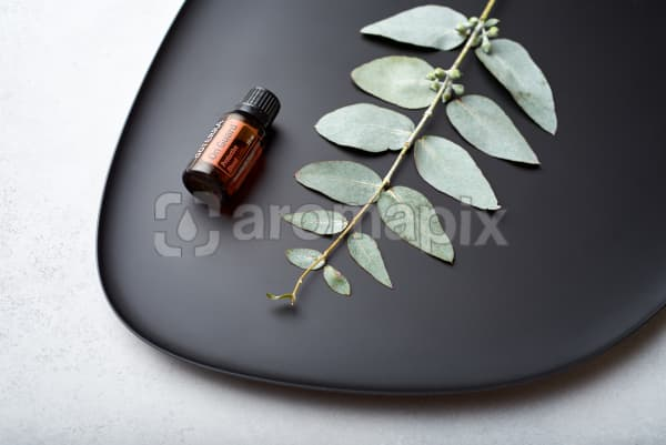 doTERRA On Guard and eucalyptus leaves on black melamine plate with white concrete background.