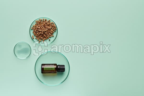 doTERRA Coriander in a petrie dish with coriander seeds and oil in petrie dishes on a pale green background.