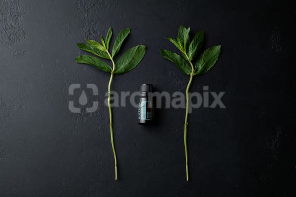 doTERRA Spearmint with a mint branch on a black stone background.