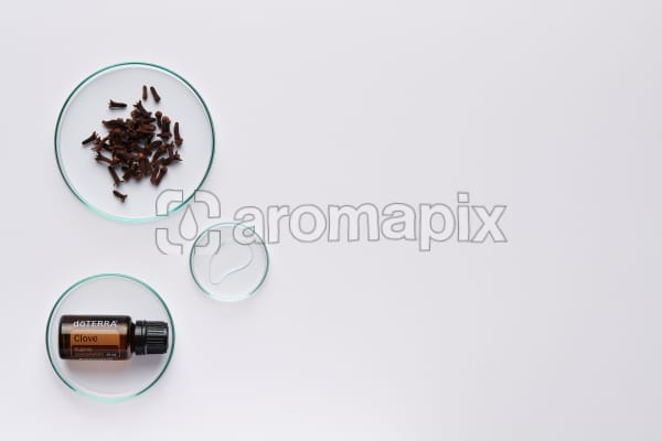 doTERRA Clove in a petrie dish with clove buds and oil in petri dishes on a white background.