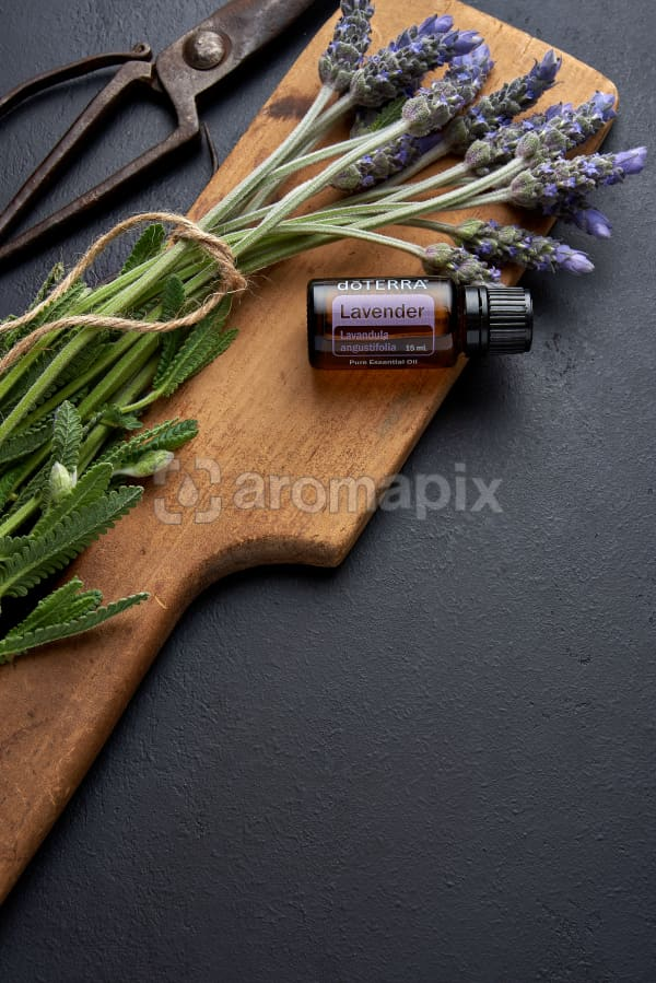 doTERRA Lavender, vintage scissors and chopping board and lavender stems tied with twine on black concrete background.