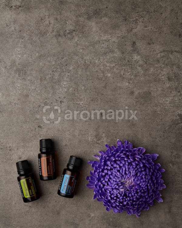 doTERRA Bergamot, Frankincense and Ylang Ylang with a purple chrysanthemum on a gray stone background.