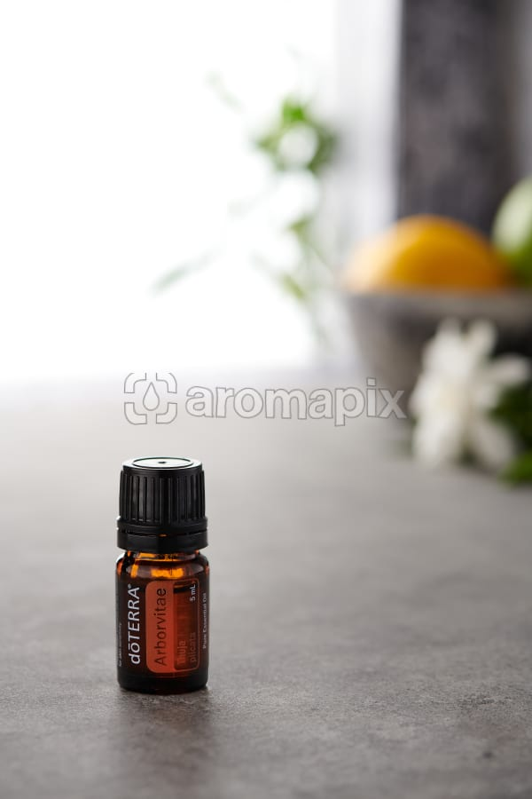 doTERRA Arborvitae on a bench in a rustic setting near a window.