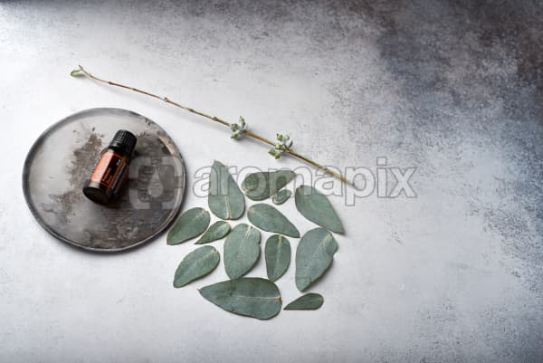 doTERRA On Guard on distressed ceramic plate with eucalyptus leaves on white concrete background.
