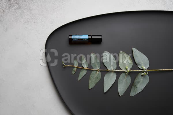 doTERRA Easy Air Touch and eucalyptus leaves on black melamine plate with white concrete background.