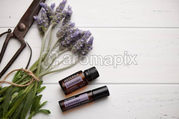 doTERRA Lavender, Lavender Touch, vintage scissors and lavender stems tied with twine on white rustic background.