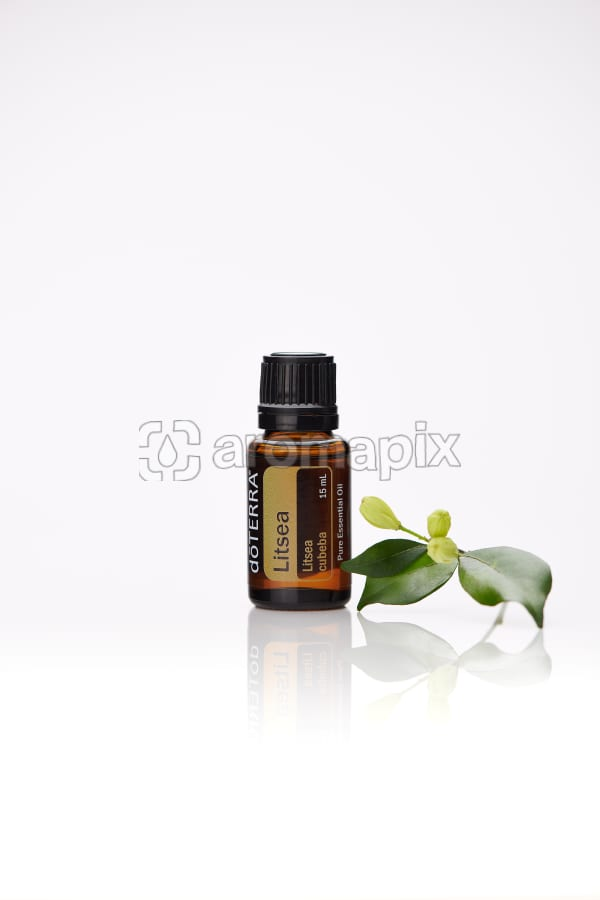 doTERRA Litsea with leaves on a white background with reflection.
