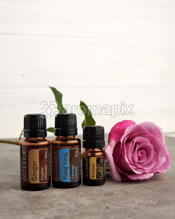 doTERRA Ginger, Ylang Ylang and Kumquat with a pink rose stem on a gray stone bench.