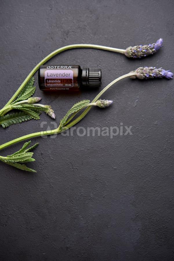 doTERRA Lavender and lavender stems on black concrete background.