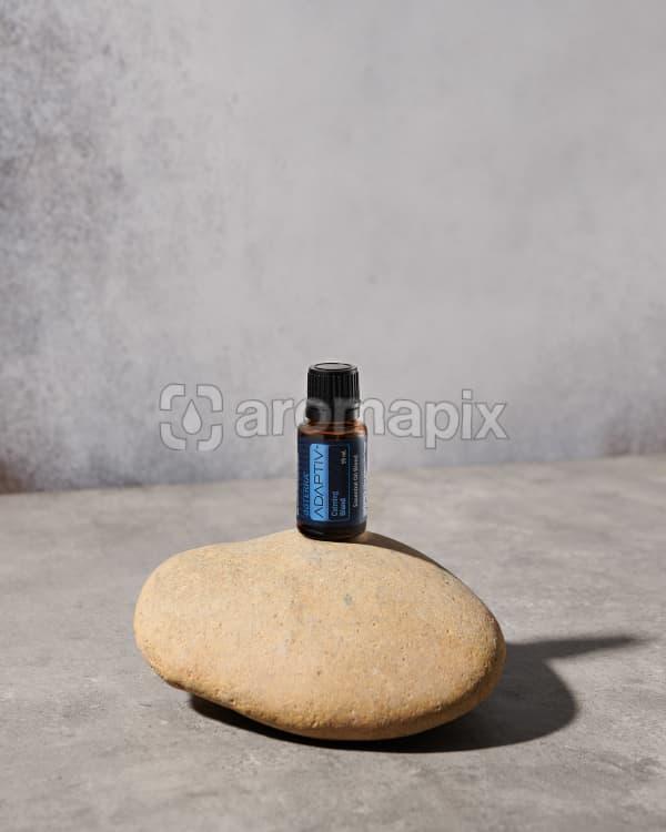 doTERRAAdaptive on a stone in the sunlight.