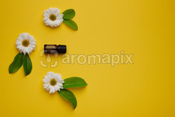 doTERRA Helichrysum with white flowers and green leaves on a yellow card stock background.