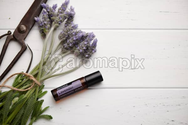 doTERRA Lavender Touch, vintage scissors and lavender stems tied with twine on white rustic background.