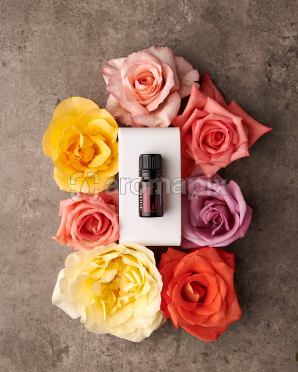doTERRA Rose essential oil surrounded with coloured roses on a gray stone background.