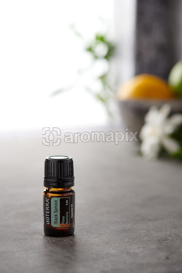 doTERRA Black Spruce on a bench in a rustic setting near a window.