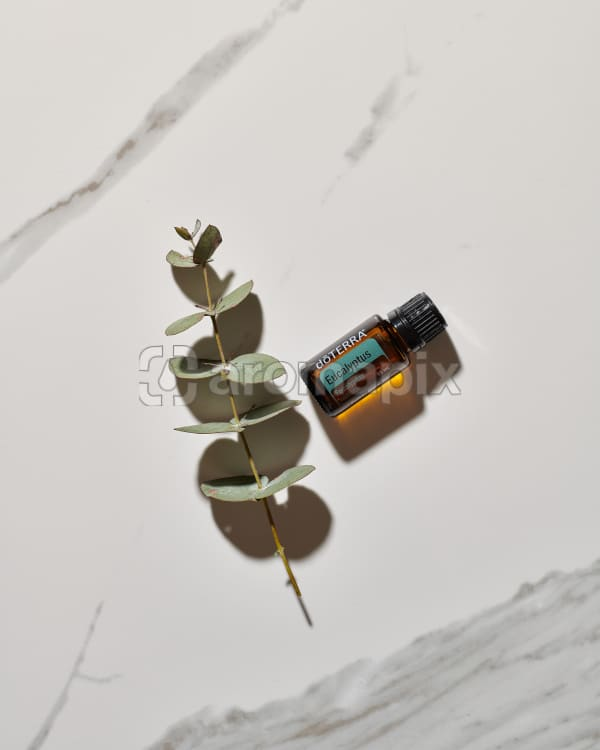 doTERRA Eucalyptus essential oil and a eucalyptus stem lying on white marble in the sun.