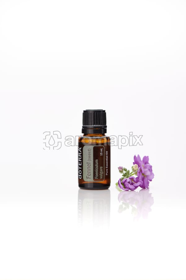 doTERRA Fennel with flowers on a white background with reflection.