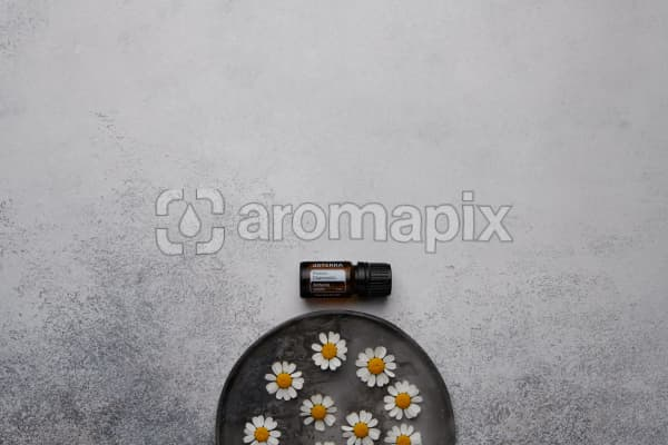doTERRA Roman Chamomile with chamomile flowers on a ceramic plate on a white concrete background.