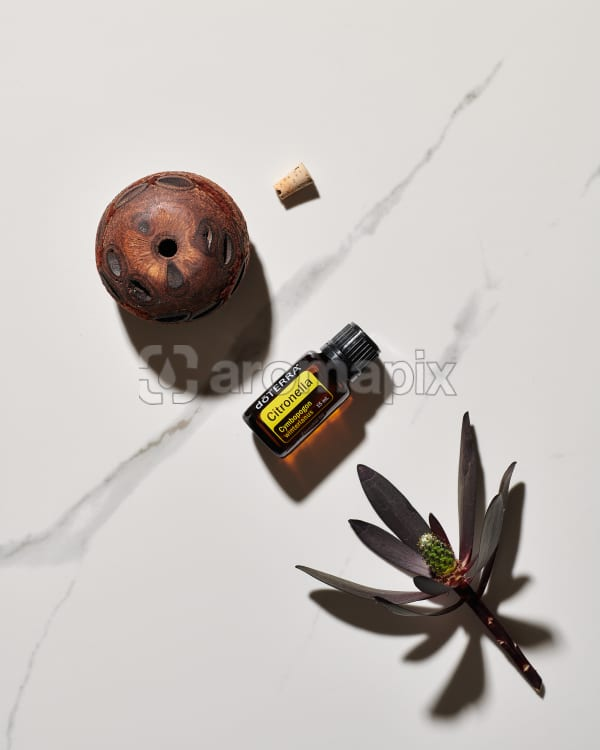 doTERRA Citronella, a banksia pod diffuser and plant lying on white marble in the sun.