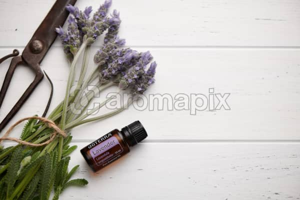 doTERRA Lavender, vintage scissors and lavender stems tied with twine on white rustic background.