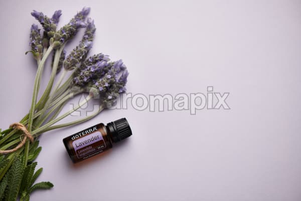 doTERRA Lavender and lavender stems tied with twine on pale purple background.