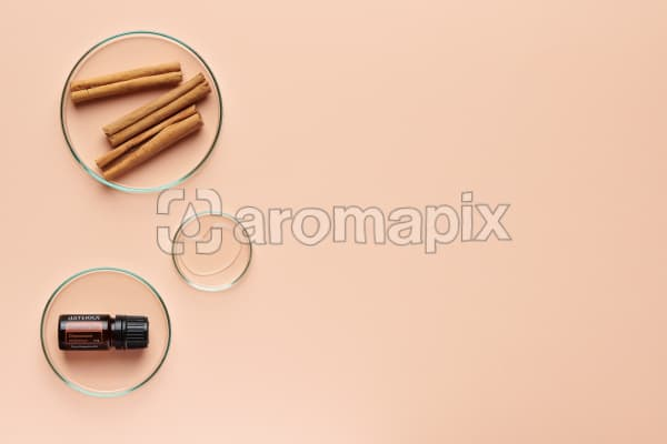 doTERRA Cinnamon in a petrie dish with cinnamon bark and oil in petrie dishes on a pale orange background.
