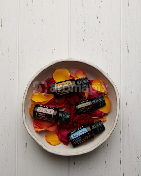 doTERRA Wild Orange, Cedarwood, Sandalwood and Ylang Ylang on roses and rose petals in a ceramic bowl on a white wooden background.