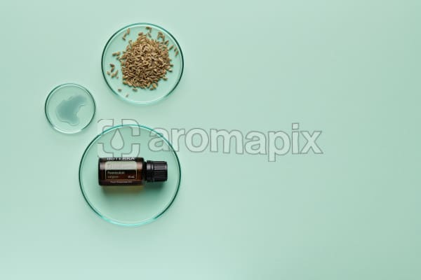 doTERRA Fennel in a petrie dish with fennel seeds and oil in petrie dishes on a pale green background.