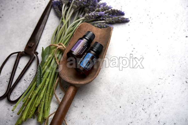 doTERRA Lavender and Peppermint in a wooden scoop with lavender stems tied with twine and vintage scissors on a white concrete background.