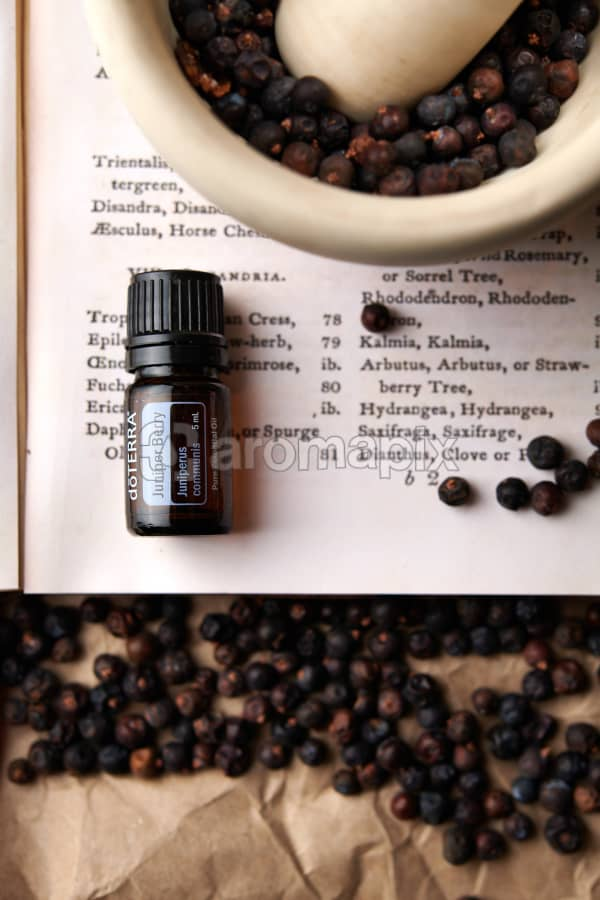 doTERRA Juniper Berry on a vintage botany book with dried juniper berries in a mortar and pestle and vintage juniper illustrations.