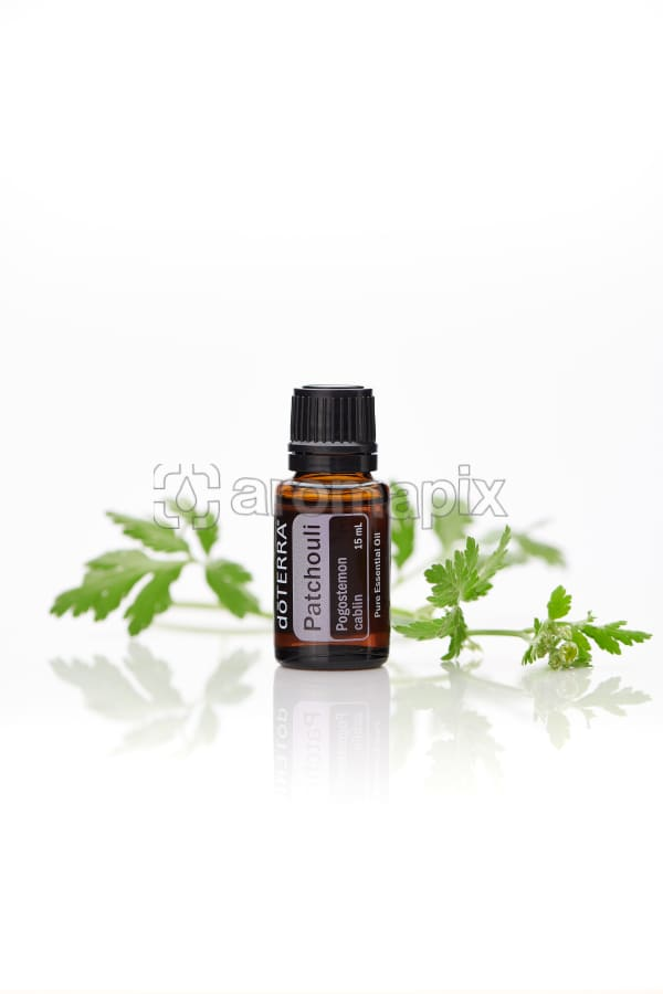 doTERRA Patchouli with leaves on a white background with reflection.