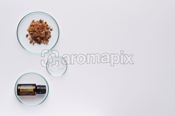 doTERRA Myrrh in a petrie dish with myrrh resin and oil in petri dishes on a white background.