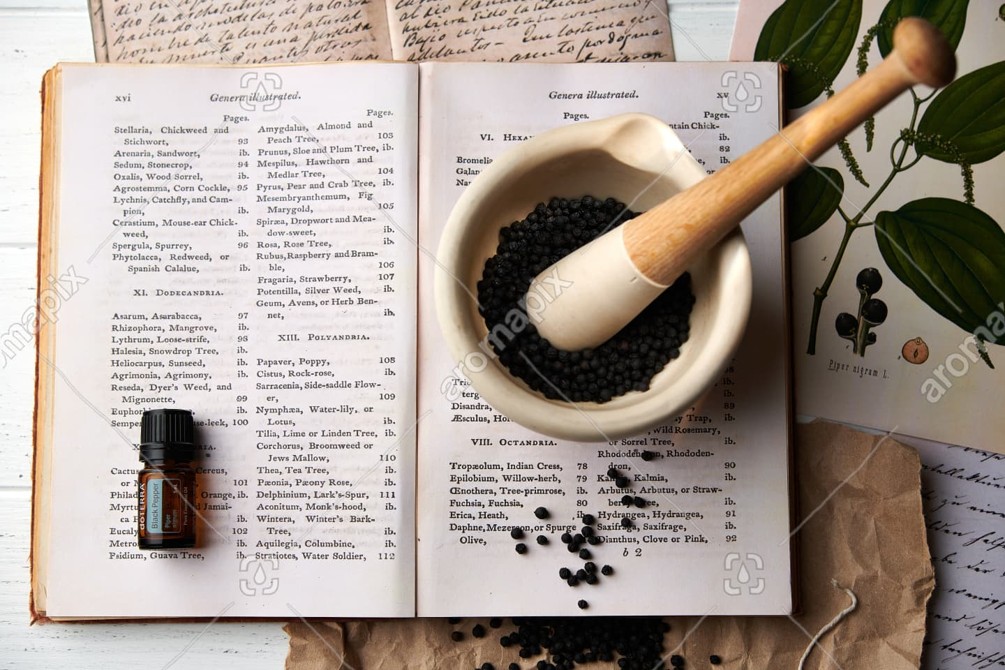 doTERRA Black Pepper with dried black pepper in a mortar and pestle