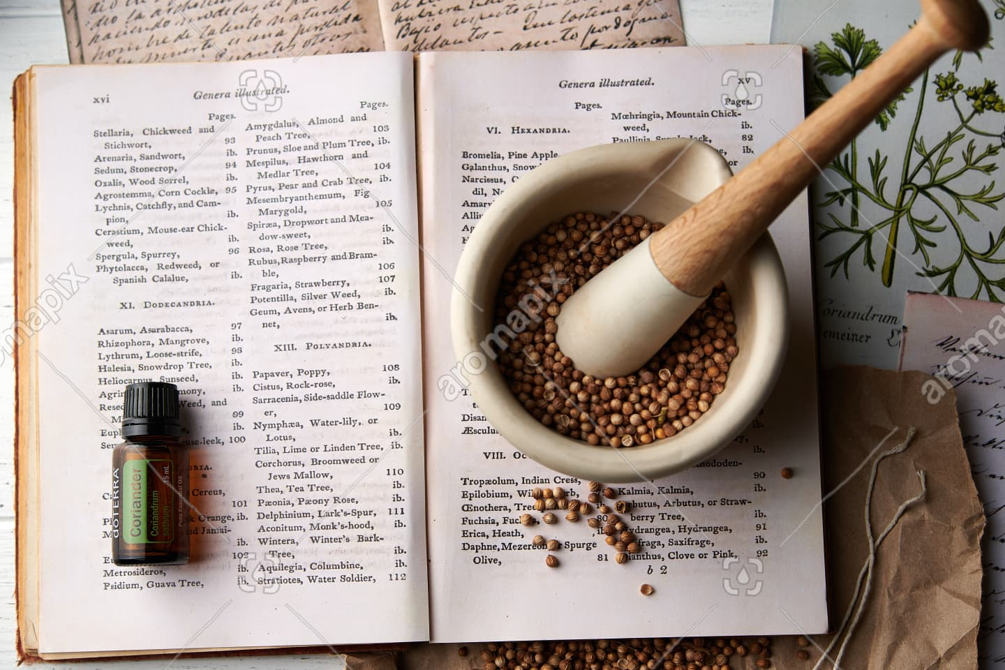 doTERRA Coriander with dried coriander seeds in mortar and pestle