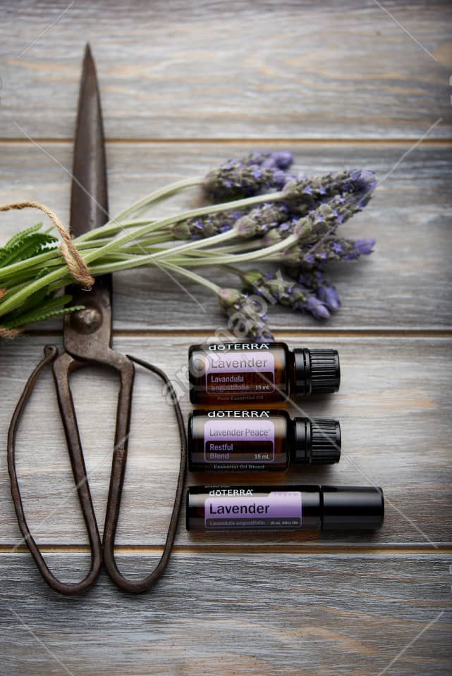 doTERRA Lavender, Lavender Peace, Lavender Touch  and lavender flowers on wood