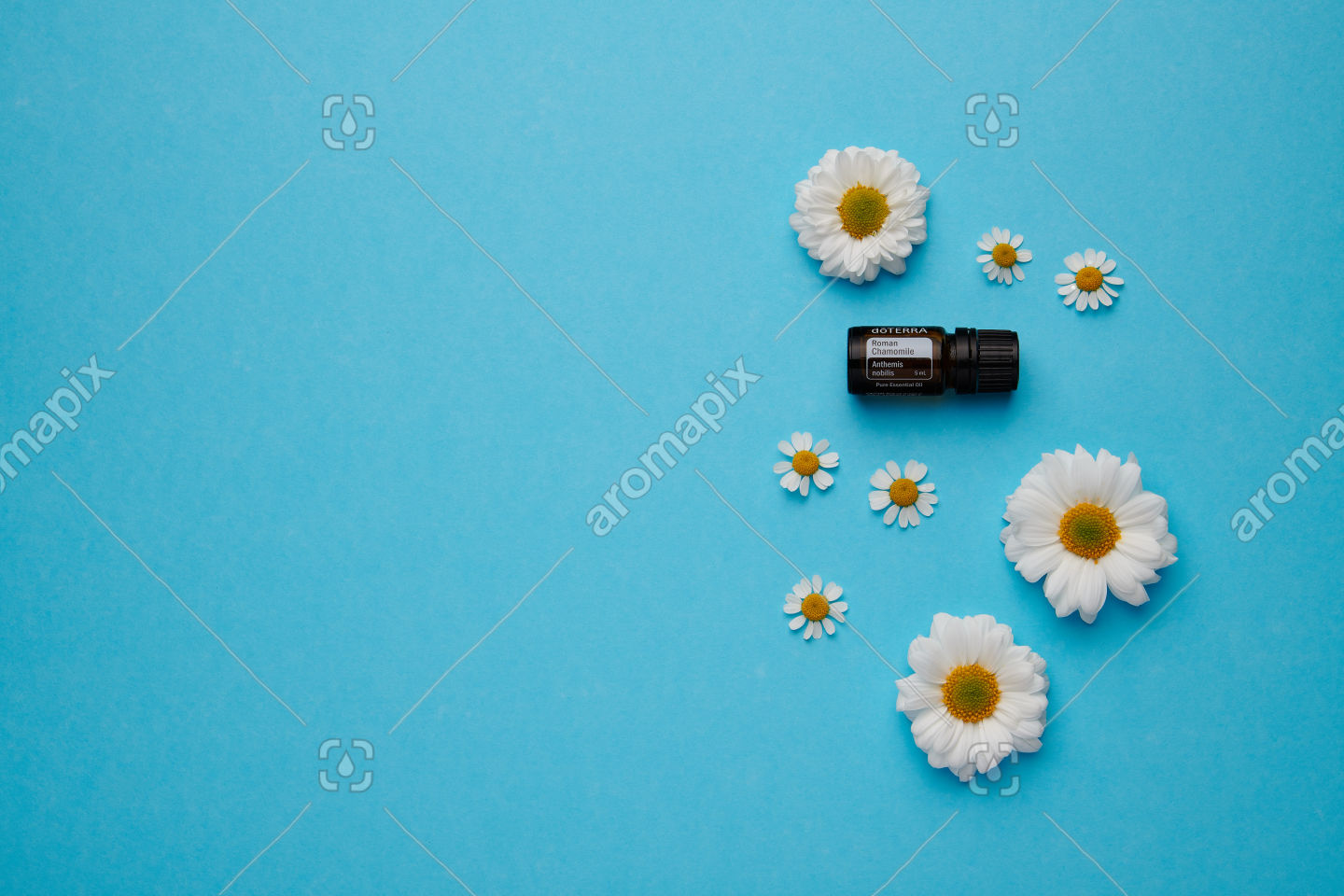 doTERRA Roman Chamomile with flowers on blue