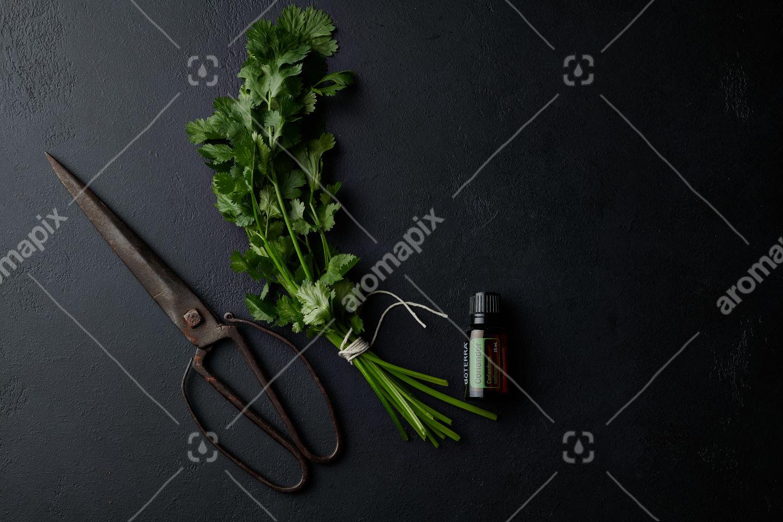 doTERRA Coriander with scissors and a coriander bunch