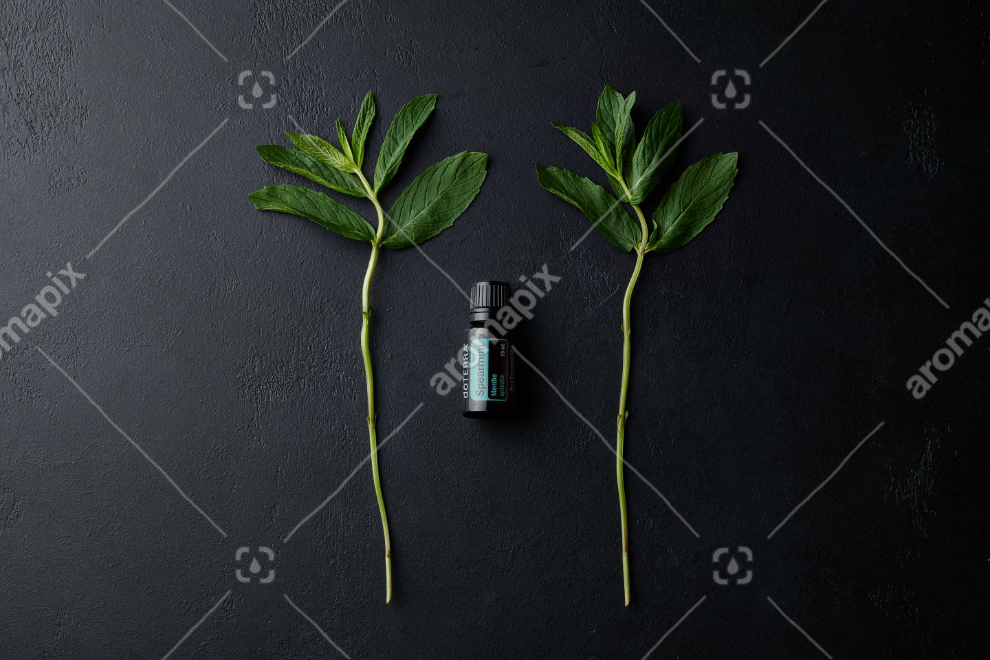doTERRA Spearmint with a mint branch on black