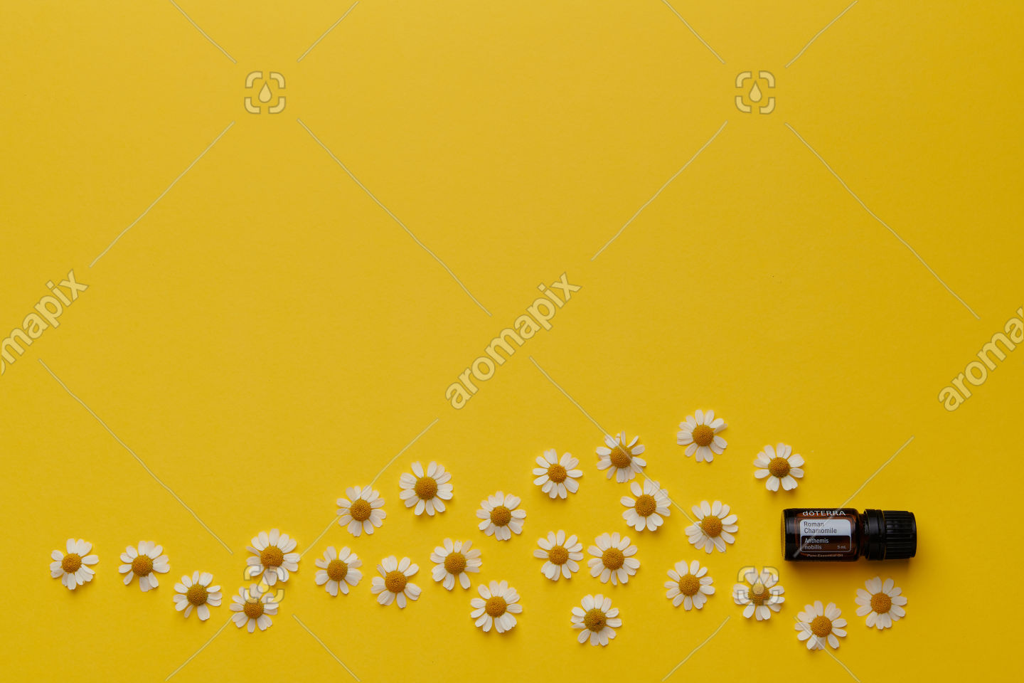 doTERRA Roman Chamomile with chamomile flowers on yellow