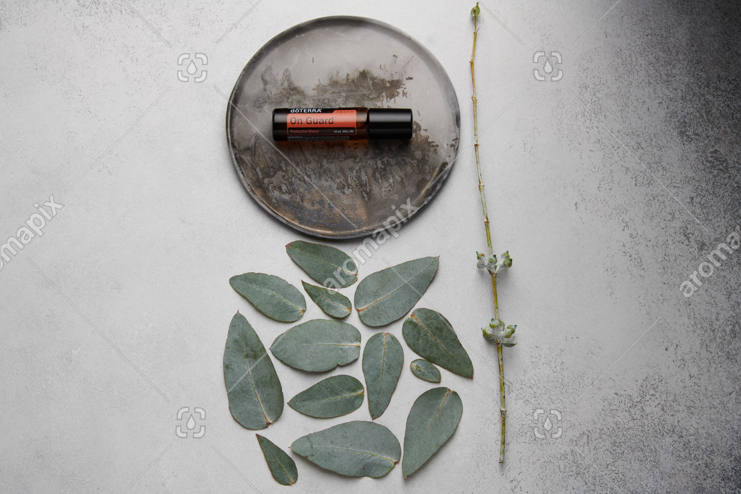 doTERRA On Guard Touch and eucalyptus leaves on white concrete