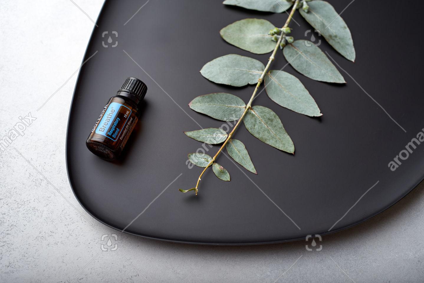 doTERRA Breathe and eucalyptus leaves on black plate