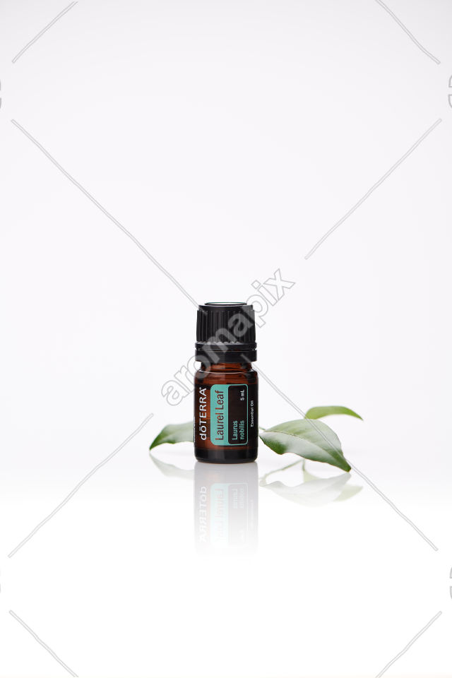 doTERRA Laurel Leaf with laurel leaves on white