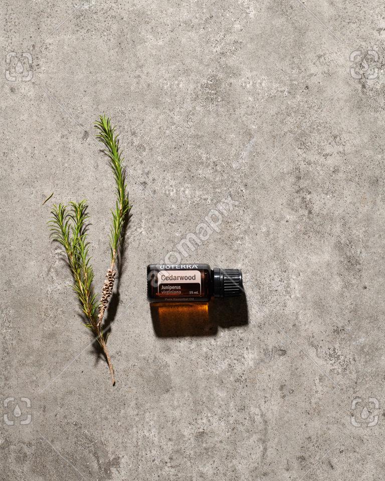 doTERRA Cedarwood essential oil in sunlight