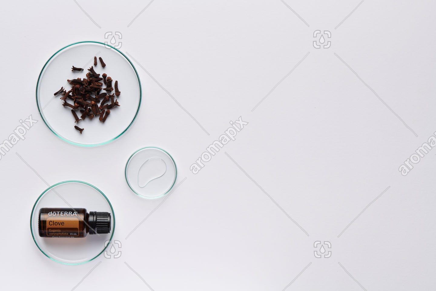 doTERRA Clove with clove buds on white