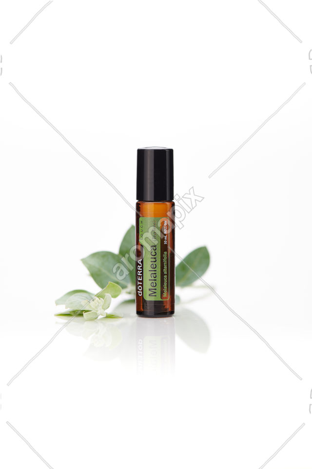 doTERRA Melaleuca Touch on white