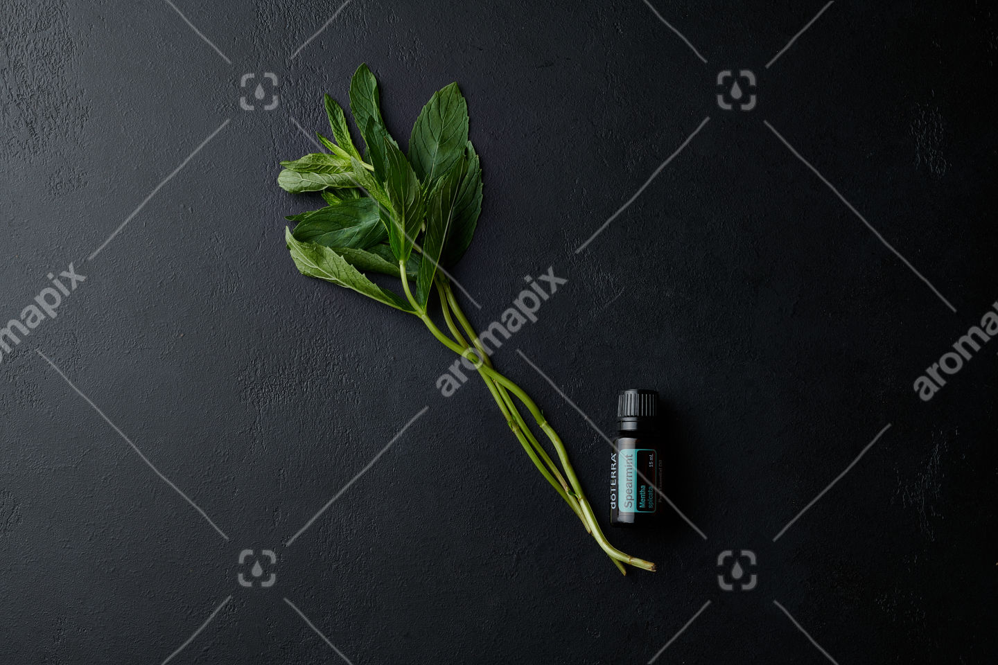 doTERRA Spearmint with a peppermint branch on black
