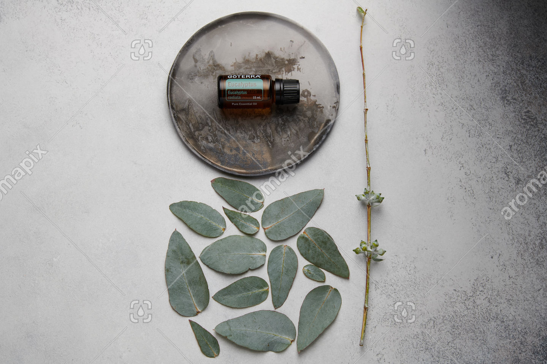 doTERRA Eucalyptus and eucalyptus leaves on white concrete