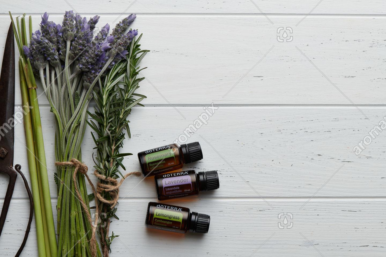 doTERRA Rosemary, Lavender and Lemongrass with lavender and rosemary flowers and lemongrass stalks on white