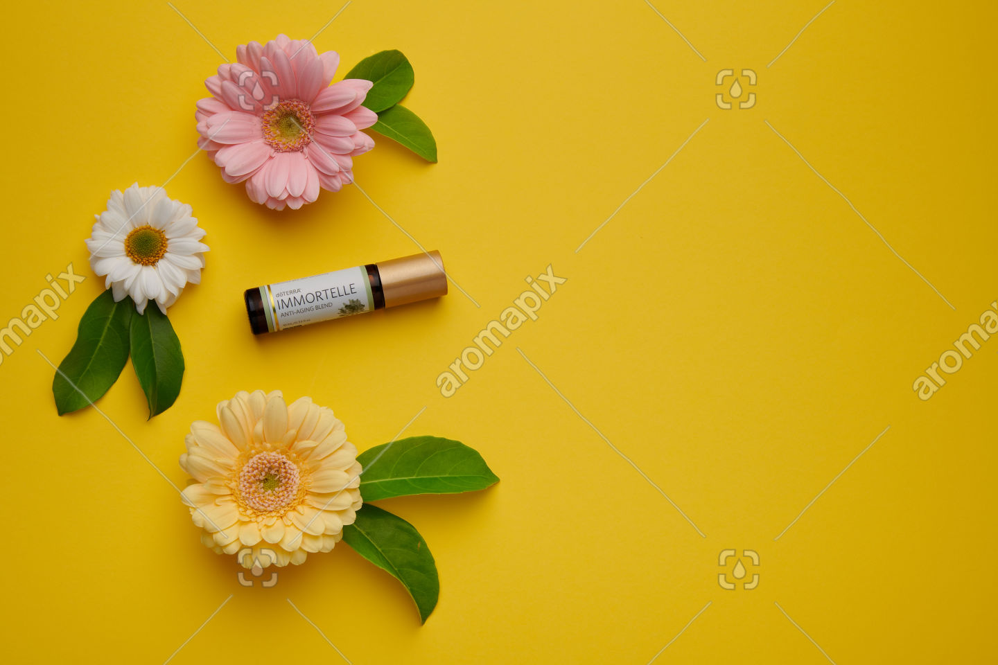 doTERRA Immortelle with flowers and leaves on yellow