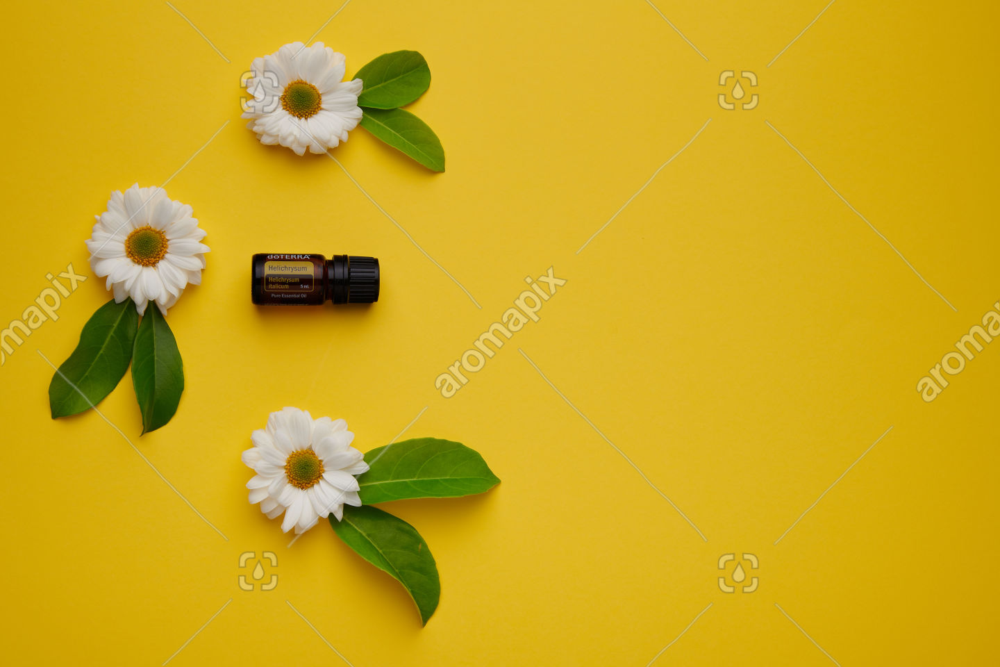 doTERRA Helichrysum with flowers and leaves on yellow
