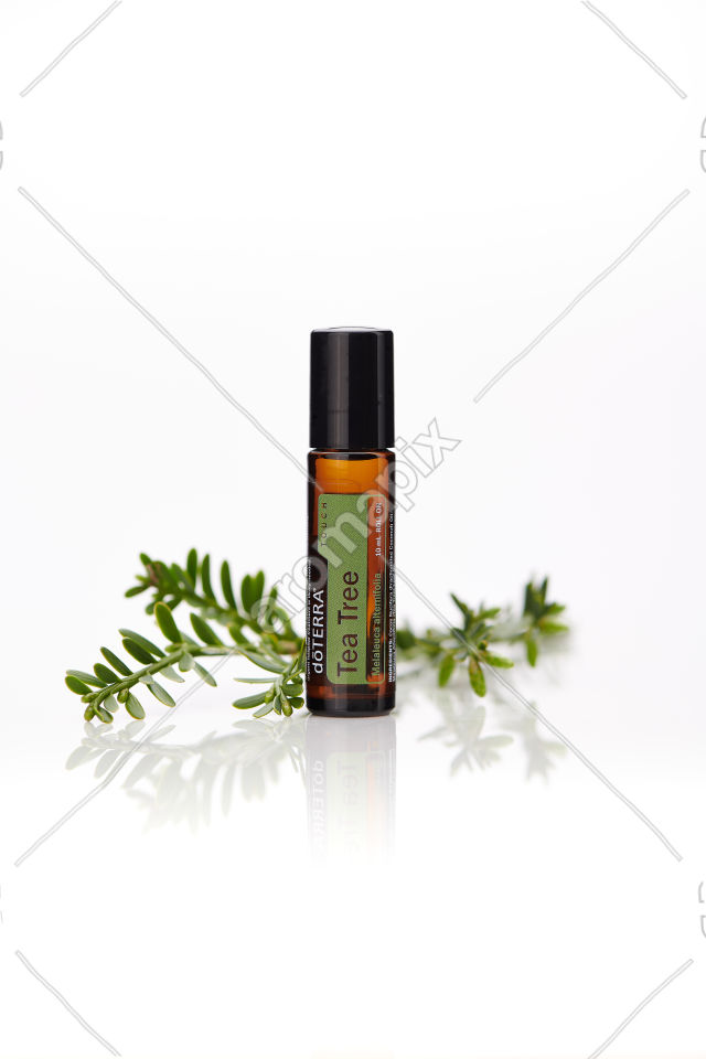 doTERRA Tea Tree Touch with leaves on white